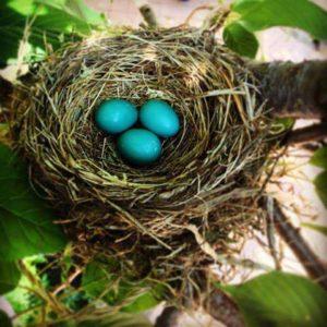 Bird nest SAH Garden 2016