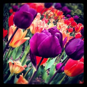 flowers SAH Garden 2016