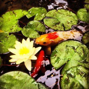 pond SAH Garden 2016